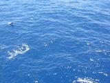 Дельфины. Служба в ВМФ